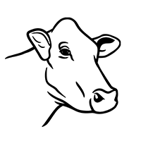 illustration of female cow head looking right