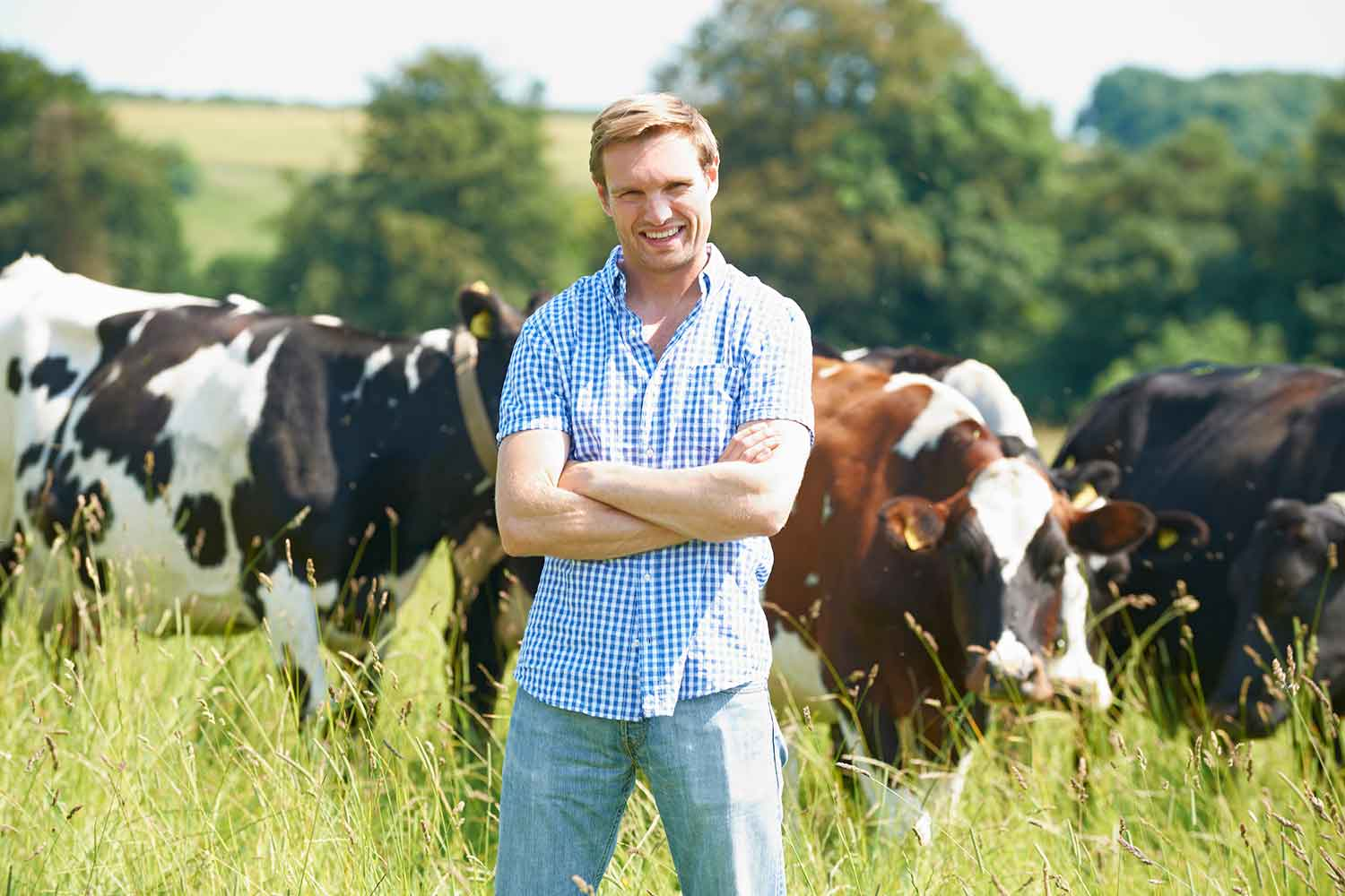 man in blue shirt and jeans standing in front of cows in pasture
