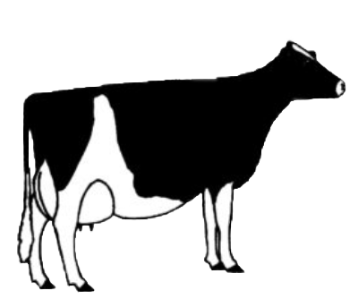 illustration of cow type one