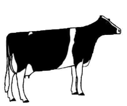 illustration of cow type two