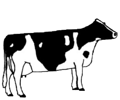 illustration of cow type four