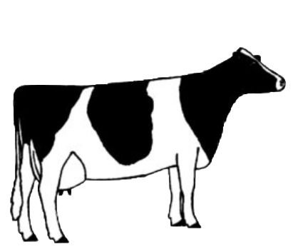 illustration of cow type six