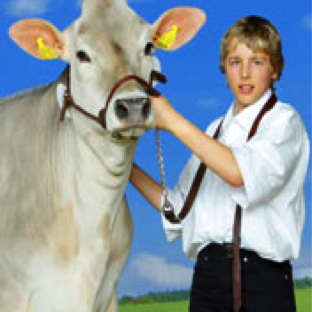 Josef Berchtold with light colored cow